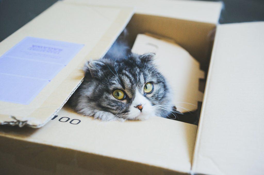 Cat at card board box