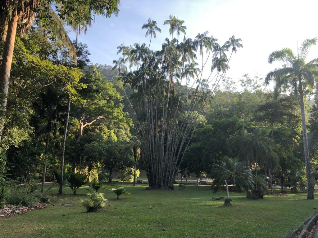 Botanical_09