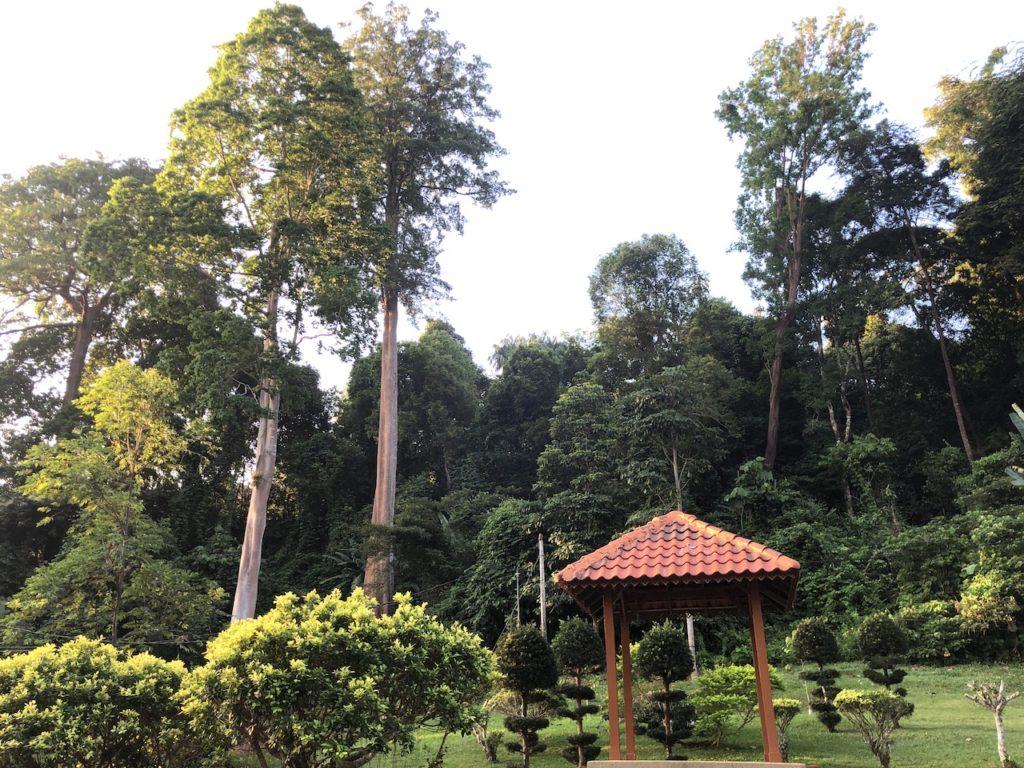 Botanical_13